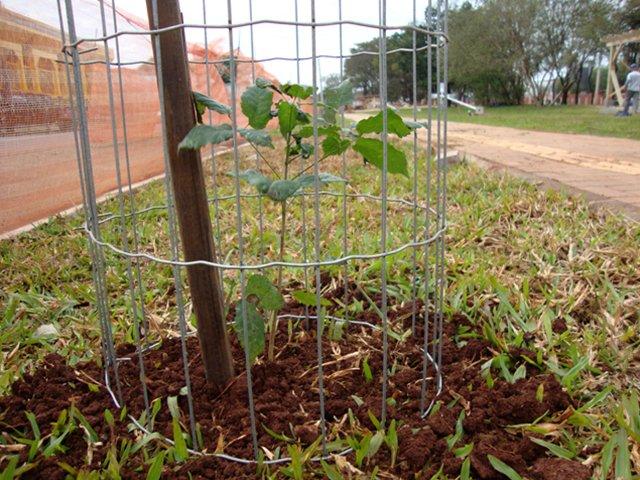 Plantar árvore é o suficiente para combater o aquecimento global?