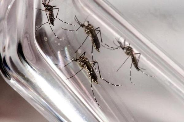 Saiba mais: Cientistas usam Zika vírus para combater tumor cerebral