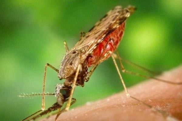 Casos de malária voltam a crescer no Brasil